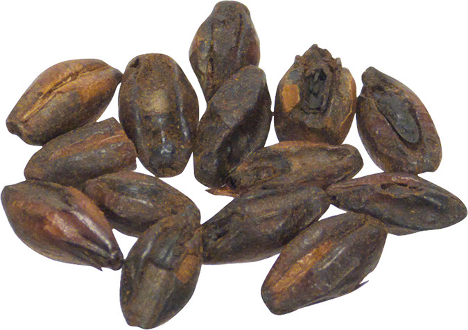 Briess Chocolate Malt 1 lb Milled
