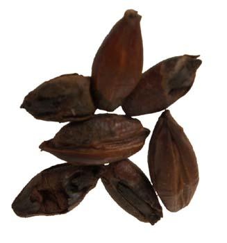 Pale Chocolate Malt 1 lb Milled