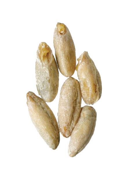 Rye Malt 1 lb Milled