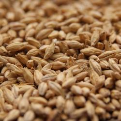 Rahr Premium Pilsner Malt - Unmilled 1 lb
