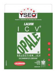 Dry Wine Yeast - Opale (500 g)
