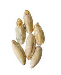 Rye Malt 1 lb