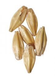 CaraBelge Malt 1 lb Milled